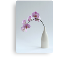 phalaenopsis orchid in white vase Canvas Print
