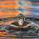 Water Drop by Teresa Zieba