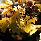 Yellow leafs by Mattias Andersson