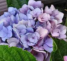 Lavander and Blue Hydrangeas by art2plunder