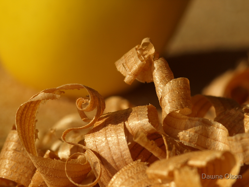 Cedar Shavings by Dawne Olson