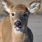 Oh Deer by JackieJlo2