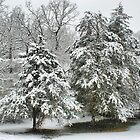 Snow Covered Cedars by Rick  Friedle