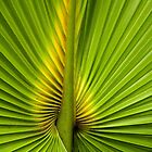 Center of the Palm by Rosalie Scanlon