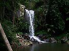 Curtis Falls - Mount Tambourine by Matthew Sims