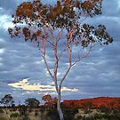 Sunset Batton Hill,North Simpson Desert by Joe Mortelliti