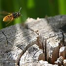 Wasp in flight by ChromaticTouch