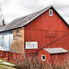 That Dam Barn by Monnie Ryan
