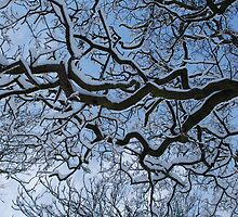branches of snow by james  lovatt