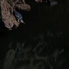 Green-Backed Heron Fishing by Aldi221