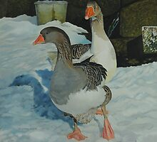 Geese in Snow - 2 by Graham Clark
