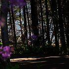 Hillsborough River Trail by Craig Blanchard