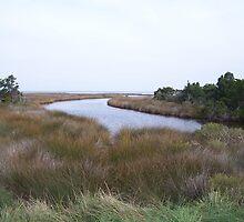 Ocracoke Island by DianaTaylor/ JacksonDunes