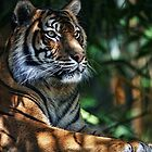 Dappled Tiger by Karen Scrimes