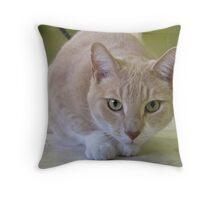 Grover exploring Throw Pillow