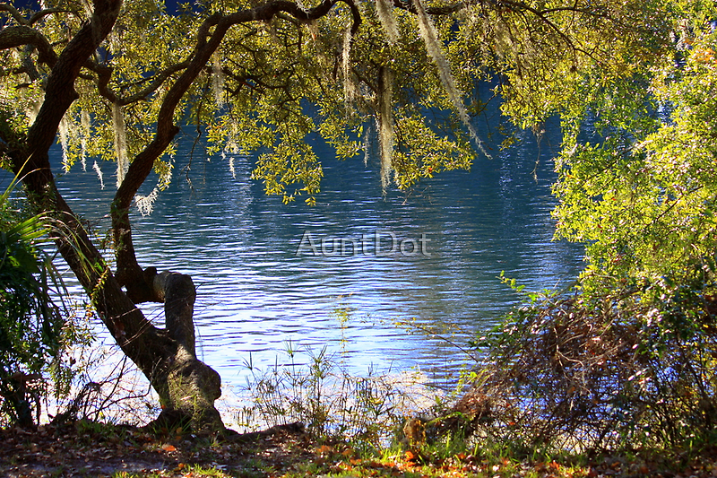 A Glimpse of the Withlacoochee by AuntDot
