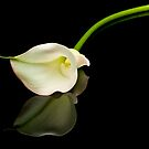 Calla Lily on Black Glass by Jim Felder