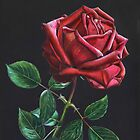 Night Rose  by Valentina Gatewood
