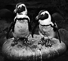 Rockhopper Penguins by Gertmint