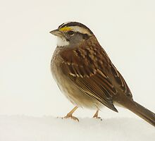 Lonely Sparrow by Trudy Wilkerson