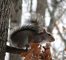 Out On A Limb by NatureGreeting Cards ©ccwri