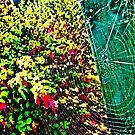 Web Spectrum by Lyndy