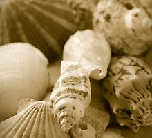 Shells by snehit