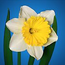 Daffodil Delight by Marija