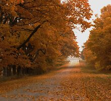 Autumn Road by MadBillArt