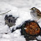 Snow Sparrow by Lisa G. Putman