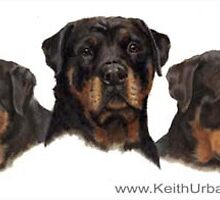 Rottweiler Triple Portrait by KeithUrban
