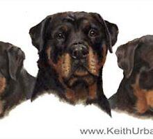 Rottweiler Triple Portrait by KeithUrban