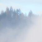 Oregon Morning Fog by Jessica Hardin