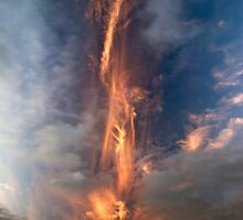 Fire Sword, Mokoia Island. by Michael Treloar
