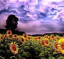 Sunflowers field by BebeMic