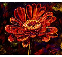 The Red Flower Photographic Print
