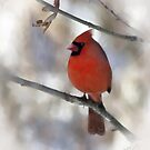 Winter Cardinal by Nancy Bray