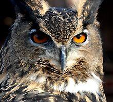 Max the Eurasian Owl by Sheila Smith