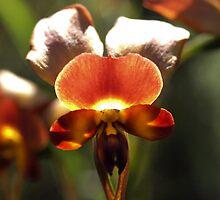 Blythe Donkey Orchid by kalaryder
