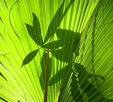 Palm Leaf Silhouettes by Rosalie Scanlon