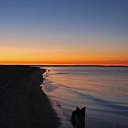 Beach Hound by Dionne A. Ward