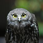 Owl Stare by Dionne A. Ward