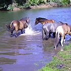 Brumbies Cooling off in the River. by Mywildscapepics