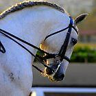 Gray dressage horse head study by ElfinYeti