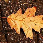 golden leaf by bfc1