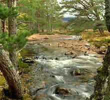 Allt Druidh In The Rothiemurchus Forest by VoluntaryRanger