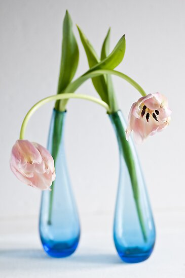 Tulips by Ilva Beretta
