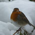 Robin in Snow by Patrick Noble