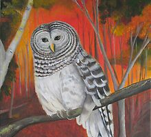 """Brown Eyes - Barred Owl"" by wendywetherbee"