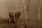 White-tailed Deer Buck Sepia by Jim Cumming